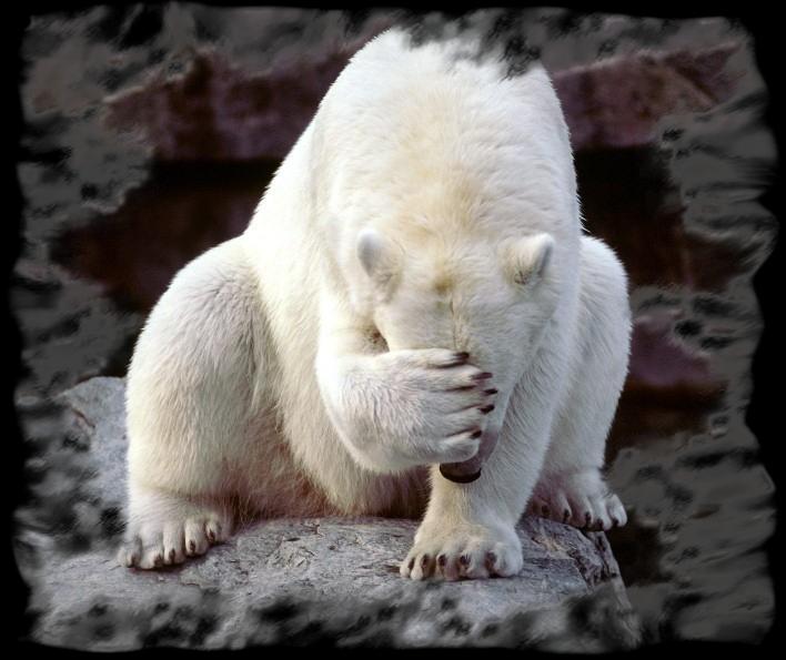 polare gay Orso